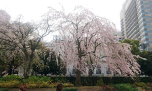 横浜お散歩レッスン